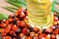 Crude palm oil and sunflower oil and cooking oil for sell